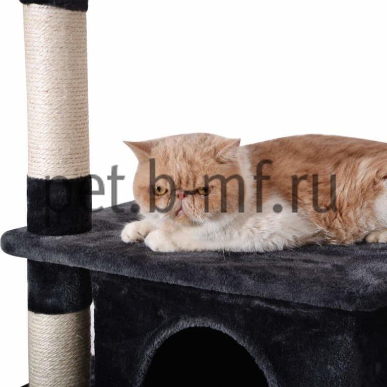 Клуб кошек фарус москва коралловый клуб официальный сайт москва каталог товаров